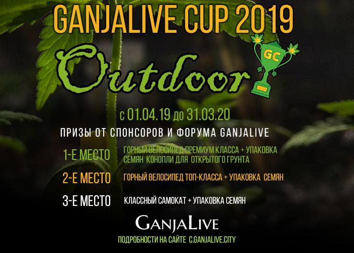 GanjaLive удивляет размахом конкурса для гроверов