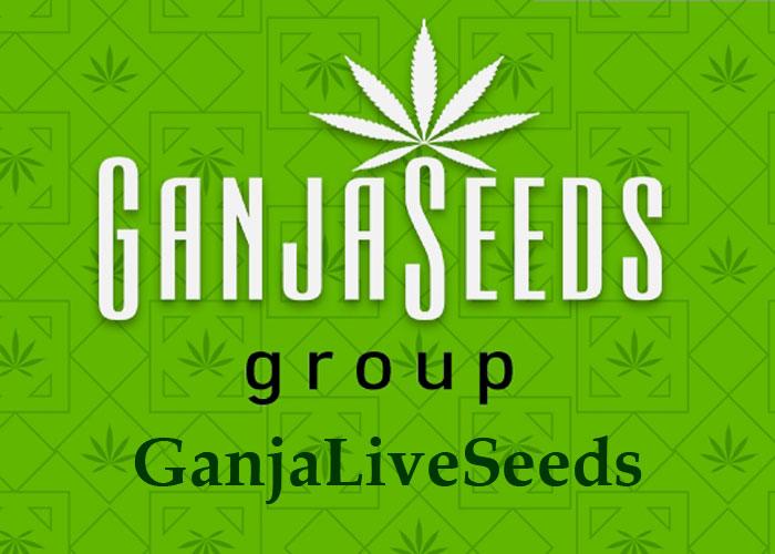GanjaLiveSeeds