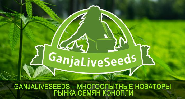 GanjaLiveSeeds – многоопытные новаторы рынка семян конопли