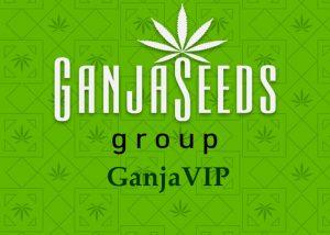 семена конопли GanjaVIP