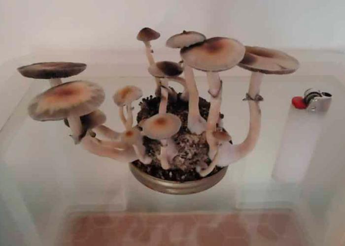 Как вырастить «волшебные» грибы за 7 простых шагов культивация