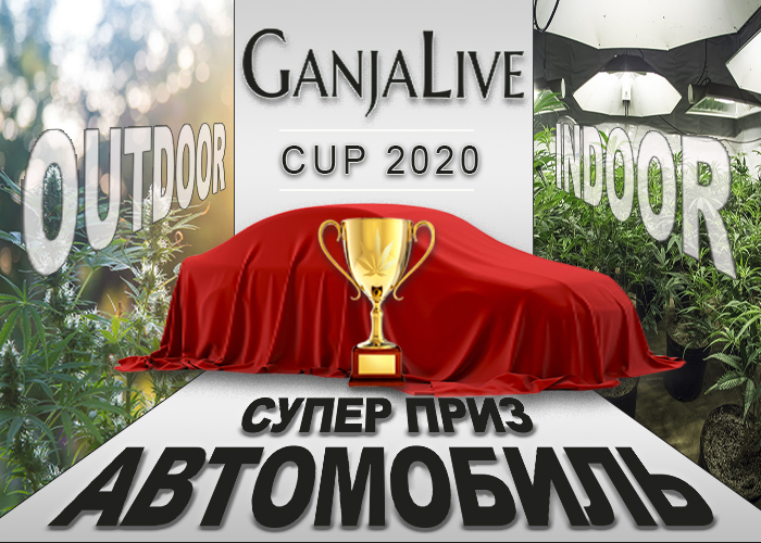 GanjaLive Cup 2020