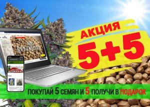 GanjaSeeds раздает бесплатные семена конопли!