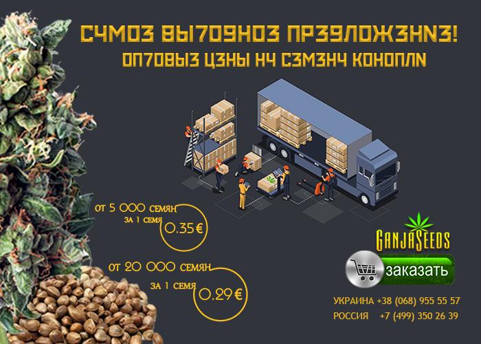Семена конопли GanjaSeeds оптом – от 0,29 евро за 1 семя