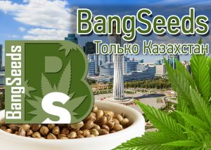 Семена конопли от GanjaSeeds в Казахстане