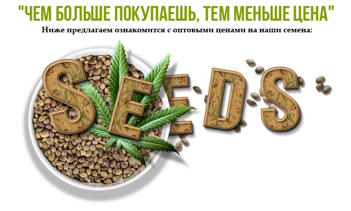 Дорогие друзья, GanjaSeedsGroup предлагает всем желающим семена конопли элитных сортов по оптовым ценам