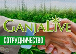 GanjaSeedsGroup