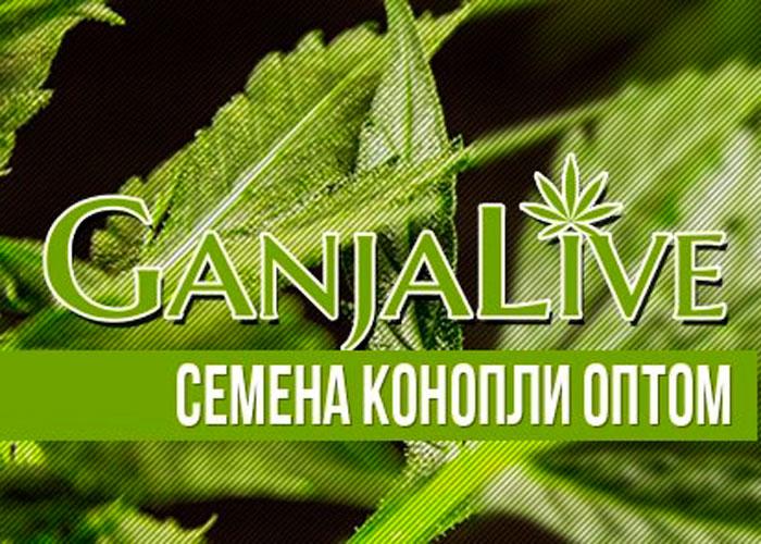 GanjaSeedsGroup