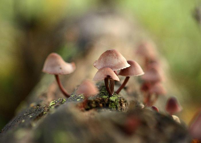 Где можно встретить шаманские грибы?