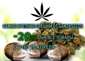 Весенние скидки на семена конопли от GanjaSeeds