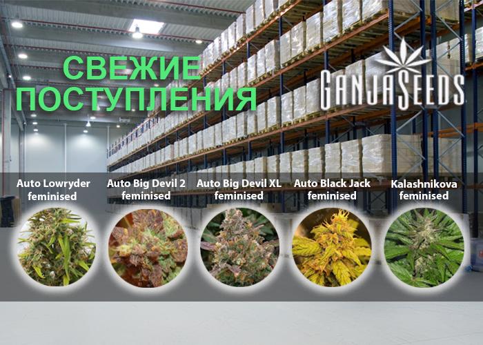 Масштабное обновление ассортимента в интернет магазине GanjaSeeds!